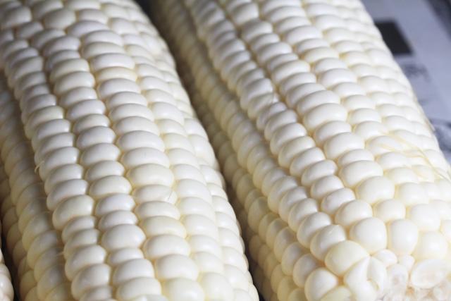 歯茎が白いのはなぜ?危険が潜む7つの原因と治療法