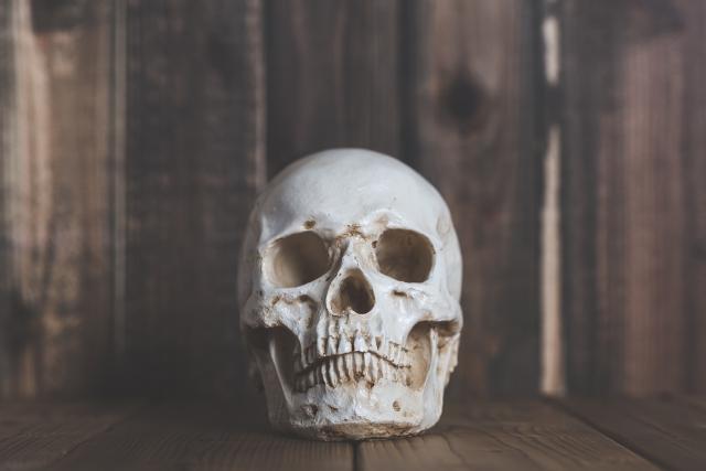 歯と骨の違いとは?骨粗鬆症と歯の関係