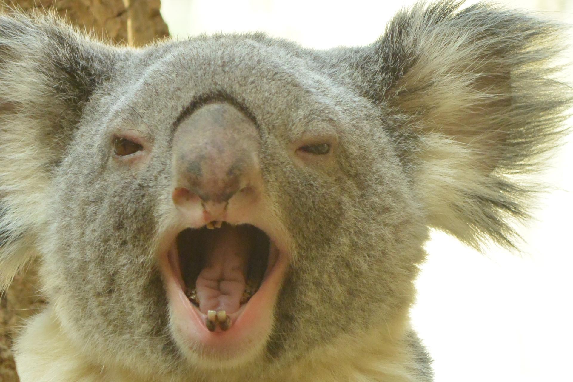 動物も歯磨きをしないと虫歯や歯周病になる?